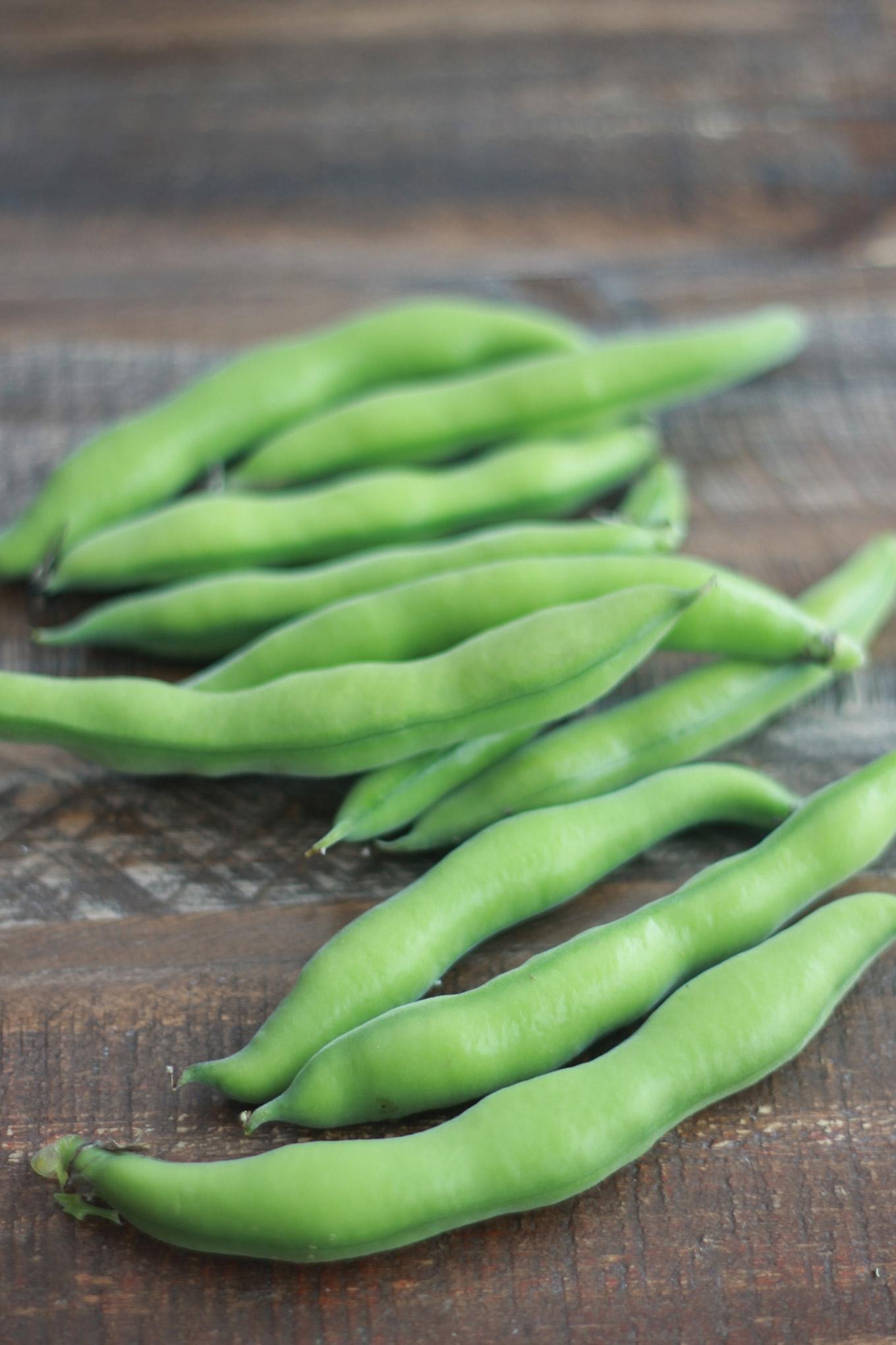 Fèves fraîches ou fèves vertes